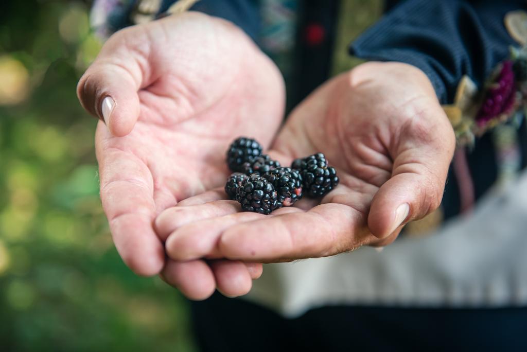 Southern Appalachian Blackberries