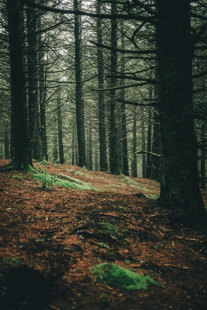 Tree Canopy Black Balsam Knob-Photographer Sabrina L Greene
