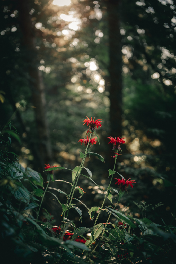 Waynesville Photographer-Sabrina L Greene-7